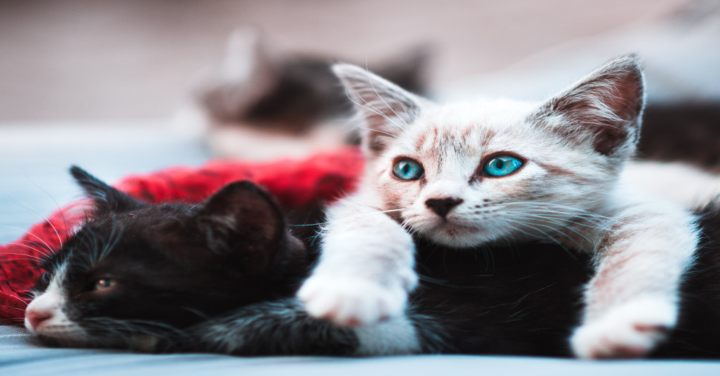 RANO ODVAJANJE mačića od majke OSTAVLJA POSLEDICE na njihovo ponašanje! Ne žurite sa tim!