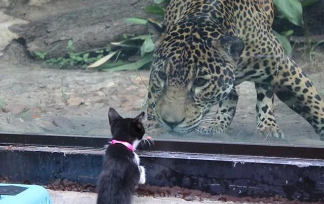 susret druge vrste, petface