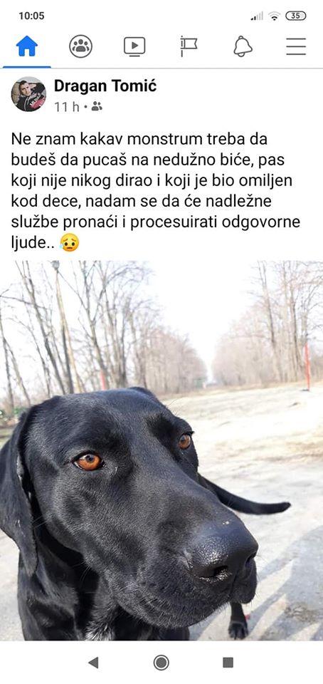 UBIJEN PAS U ALIBUNARU! Vinovnici svirepog ubistva se vratili po telo psa kako bi uklonili dokaze! (FOTO)