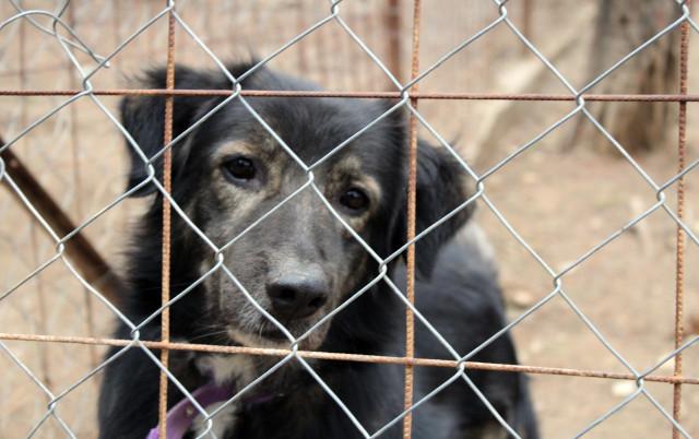 KAKVA VEST: Kompanija PLAĆA zaposlenima da udome napuštene životinje!