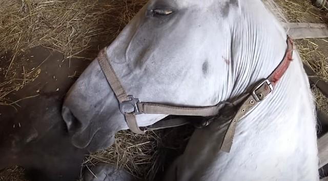 ŽIVOT PIŠE ROMANE: Konj je bio na SAMRTI, a onda mu je farmer šapnuo NEŠTO... (VIDEO)