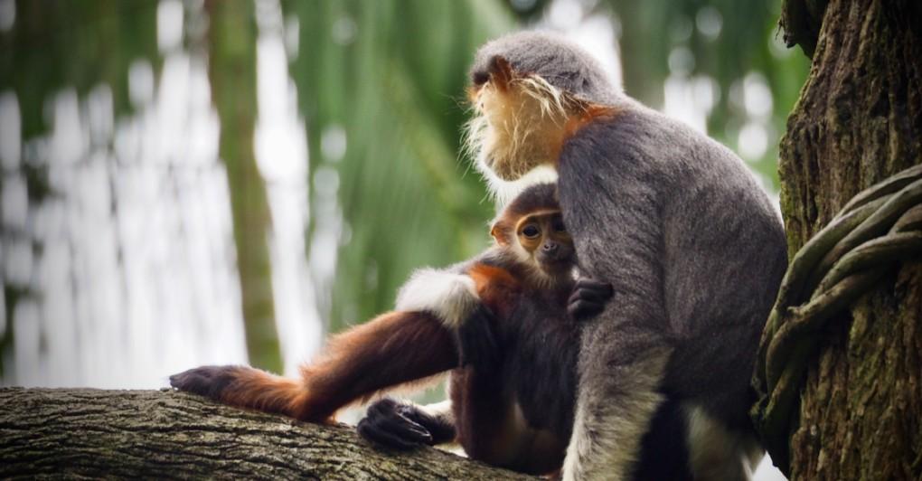 FOTOGRAFIJA KOJA STEŽE SRCE: Sva ljubav i briga jedne majke prikazane su na njoj!