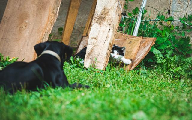 STERILIZACIJA: Zašto vlasnici ljubimaca beže od nje a onda kukaju kada ugledaju napuštene pse i mačke?!