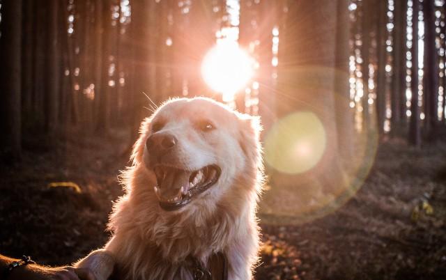 PRELETELI POLA SVETA PA POBEGLI: Dva psa su bila na putu ka svojim udomiteljima, a onda se desio HAOS!