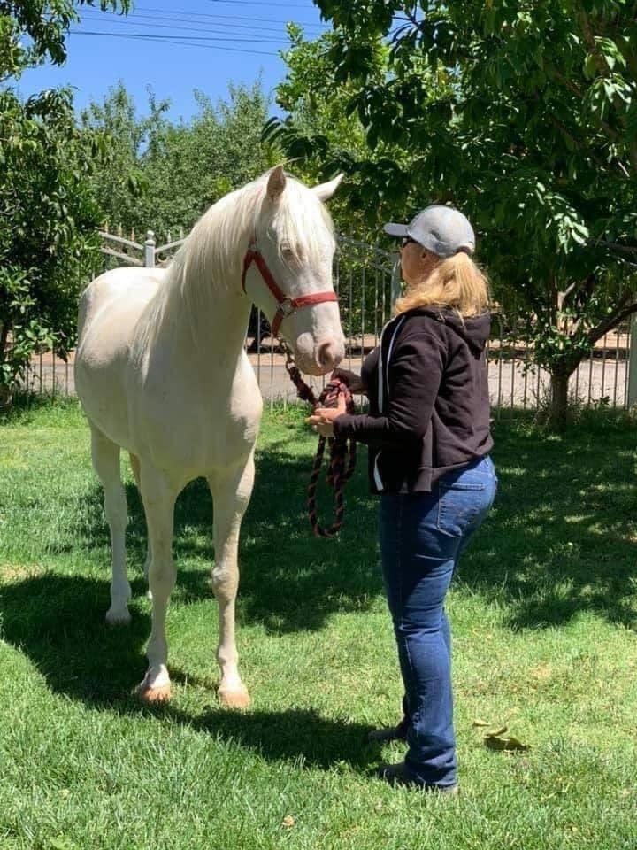 NAPUŠTENA KAO SMEĆE ali prihvaćena kao BLAGO: Zanemarivan i povređen konj stao na noge!