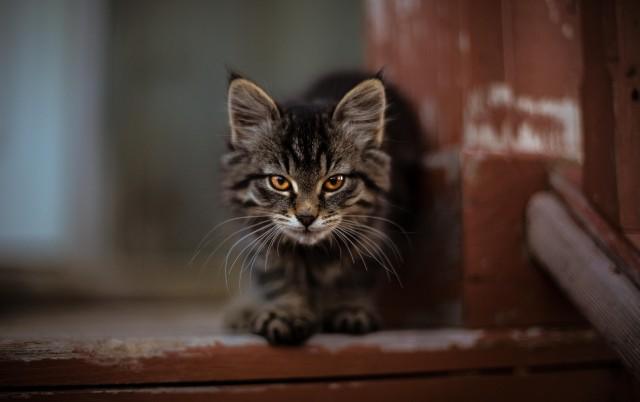 OTKRIVAMO: Da li se mačke sećaju svojih prethodnih porodica?