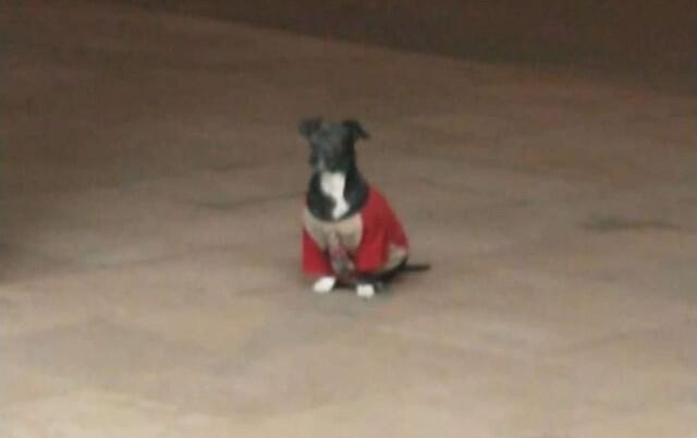 PRIČA O NESEBIČNOJ LJUBAVI: Pas se popeo na vozilo hitne pomoći kako bi bio uz vlasnika do kraja!
