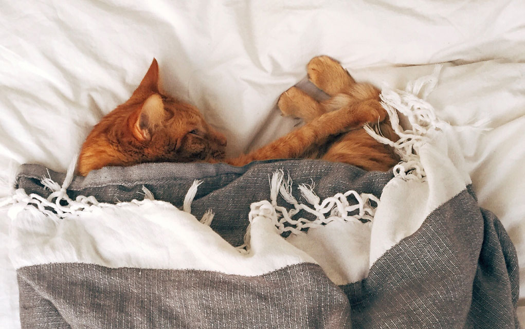 Otkrivamo: Da li mačke zaista PLAČU?!