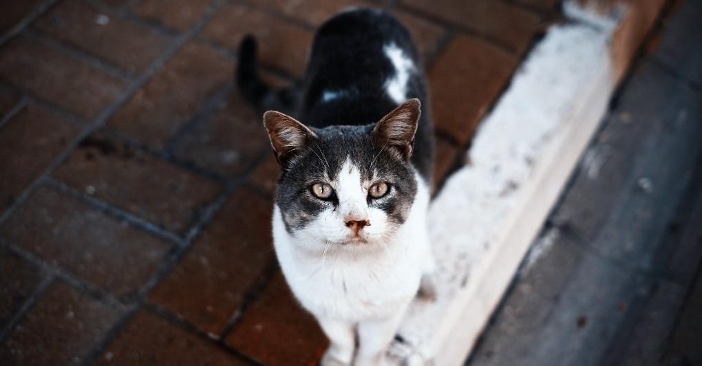 MLADIĆ IZBAČEN IZ STANA: U njemu je živeo sa 110 mačaka!