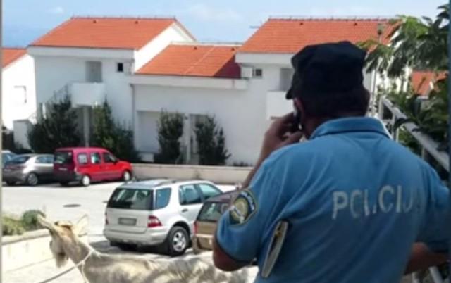 POGLEDAJTE OVAJ CIRKUS: Hrvatska policija dva sata hapsila kozu! (FOTO)