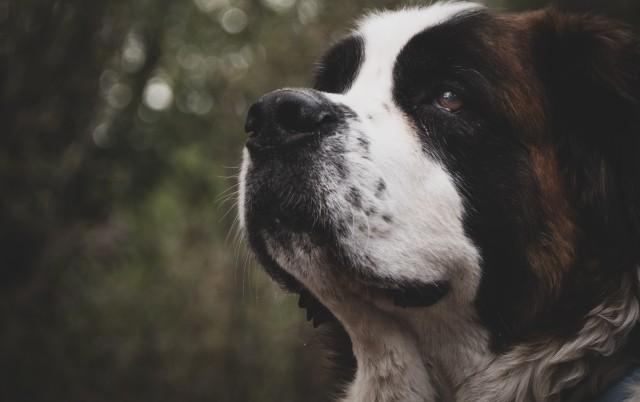 POLICIJA GA UPUCALA: Ubili su mu psa, a posle 14 godina dobio je gotovo MILION odštete!