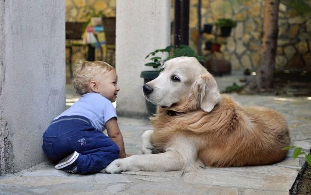 KUĆNI LJUBIMCI I DECA: Pružite im idealno detinjstvo uz najboljeg prijatelja!
