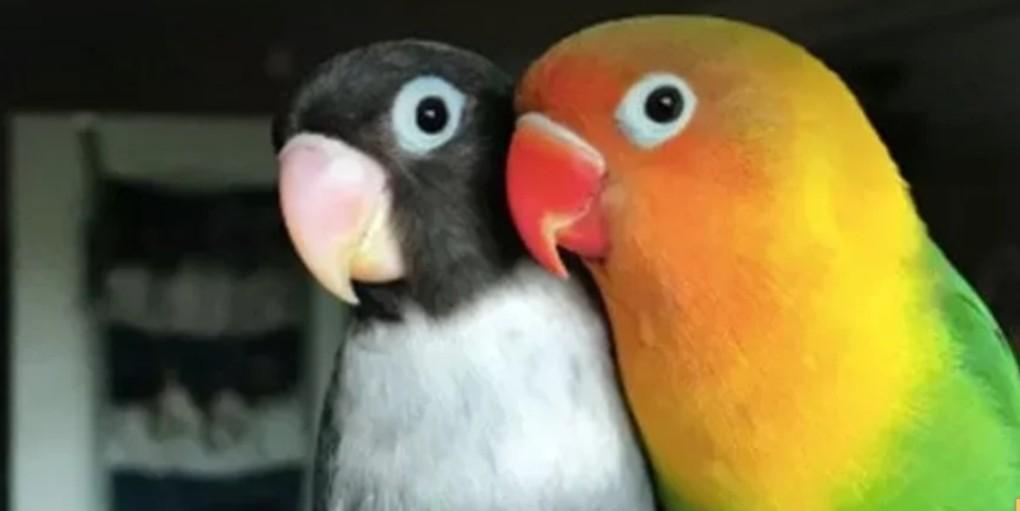 NESVAKIDAŠNJE: Papagaji isterani iz parka jer su PSOVALI prolaznike!