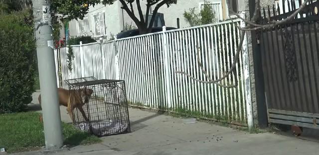 ODSELILI SE I OSTAVILI PSA NA ULICI! Pumba je godinu dana čekao da se vrate! (VIDEO)