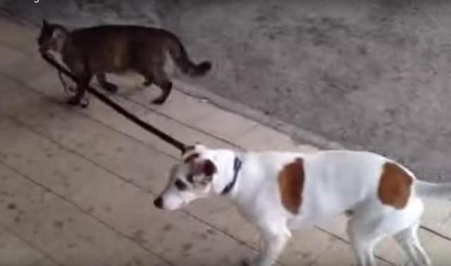 PRIZNAJTE DA OVO NIKADA NISTE VIDELI! Mačka je izvela psa u šetnju, ali stvarno... (VIDEO)