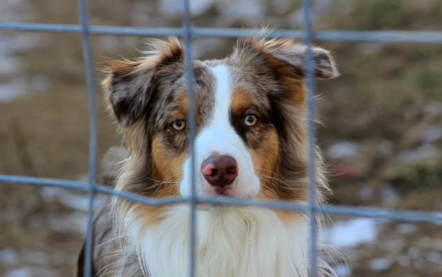 Jedan sat života psa na lancu - pakao koji ne biste poželeli ni najvećem neprijatelju!
