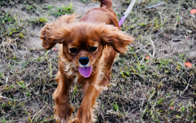 POTRESNE MISLI psa koji kopni u azilu: Prolaze leta, zime, proleća... A ja čekam da...