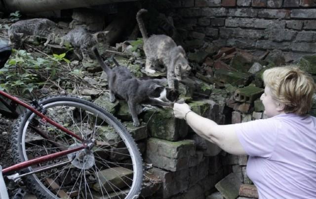 ZA PRIMER SVIMA! Ove humane dame su SPAS za kuce i mace! (FOTO)