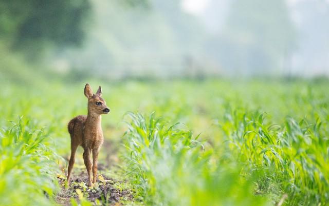 SRNDAĆ ČUDOM PREŽIVEO PAD U PRAZAN BAZEN: Rendžer i turisti spasili uplašenu životinju