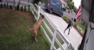 bežao preko ograde, petface