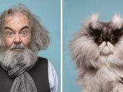 blizanci, petface, mačke