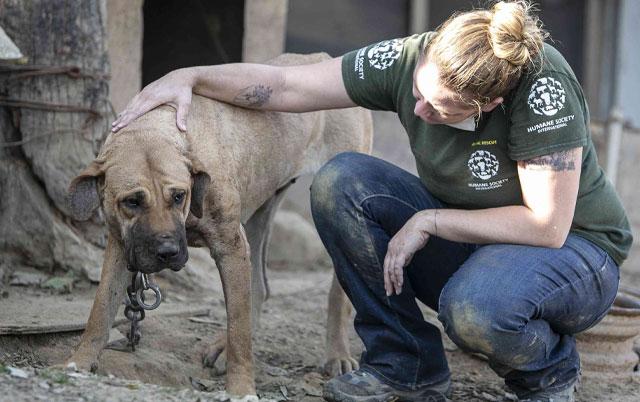 pas sa farme psećeg mesa