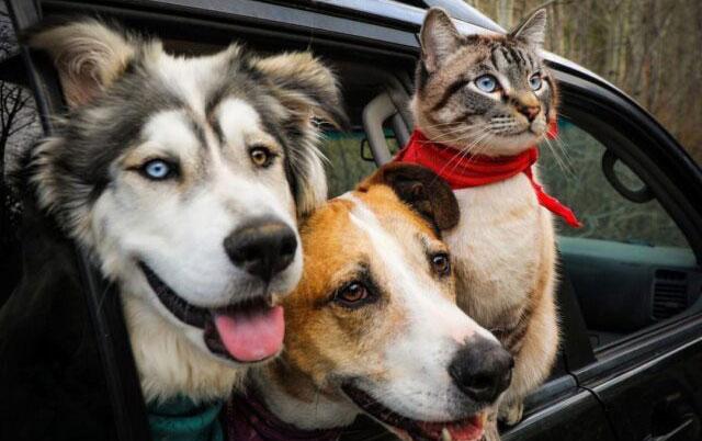 KAKAV PAR AVANTURISTA – Pas i mačka planinari