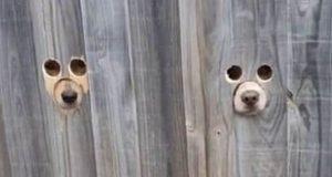 špijuni, petface