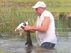 spasao psa iz čeljusti aligatora