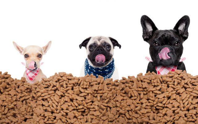 kako čitati etikete na hrani za pse