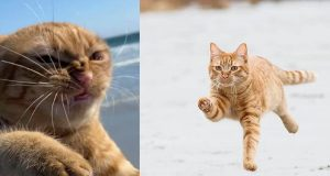 mačka na plaži