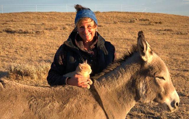 mačka i magarac prijatelji