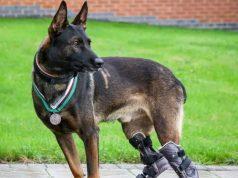 Pas invalid odlikovan za spasavanje vojnika