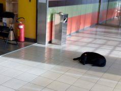 brinu o uličnom psu