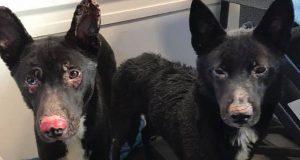 vatrogasac spasao pse