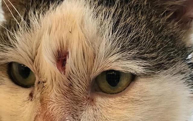 Mačak koji je upucan u glavu spreman je za udomljavanje