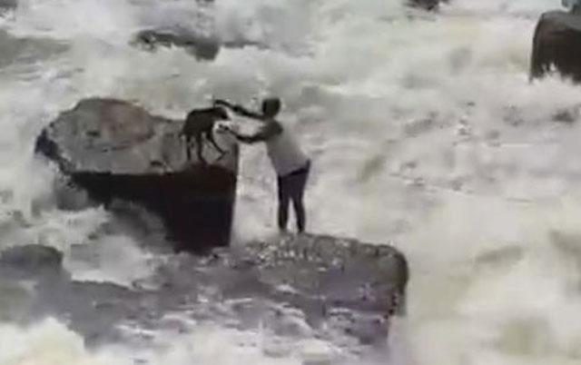 dramatično spasavanje psa