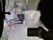 Vlasnici ostavili nepokretnog psa u podrumu