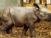 rođena beba nosoroga