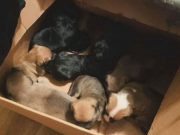 Bacio pse u kutiji