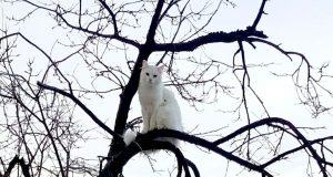drama na vrhu drveta