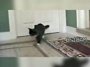 mačak doveo gosta