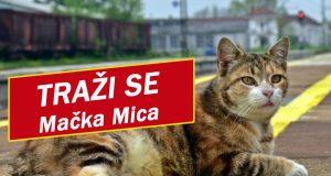Traži se mačka Mica