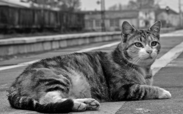 mačka Mica nađena uginula