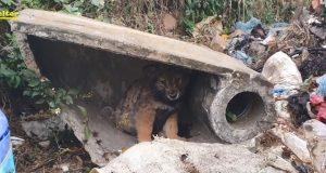 Na deponiji našao štene