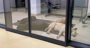 Psi u domu zdravlja