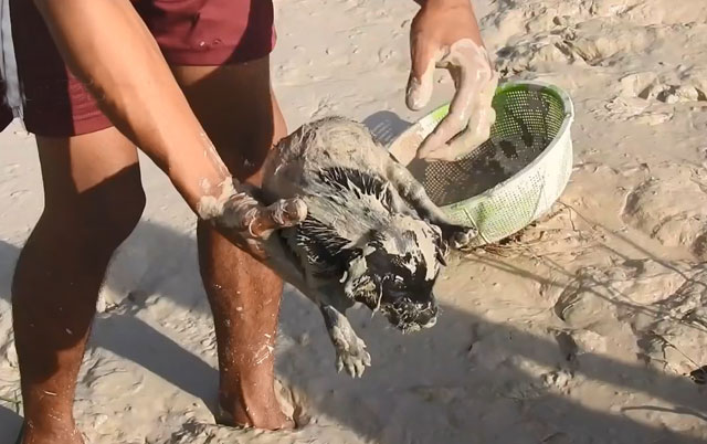 Spasli štence iz blatnjave klopke
