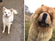 Potraga za ukradenim psima