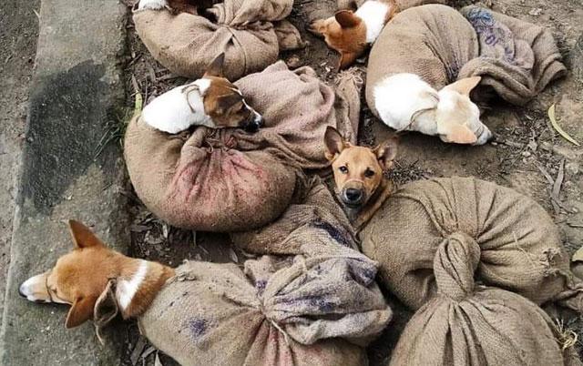 ubijeno 38 pasa