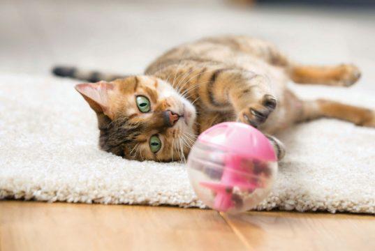Sterilizacija i ishrana mačaka